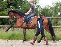 Tarifs Stages et Cours équitation