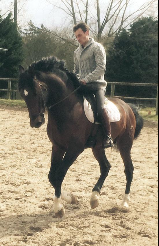 Atahualpa - pure race espagnole 5 ans, élevage Gouello