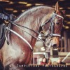 salon-du-cheval-villepinte-2016-02