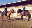Cours d'équitation à Rambouillet – Ecurie MGD
